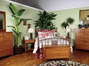 plants bedroom