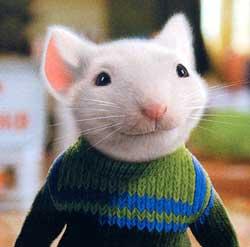 rat 6