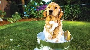 castile-soap-dog