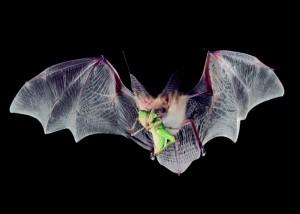 bats-4
